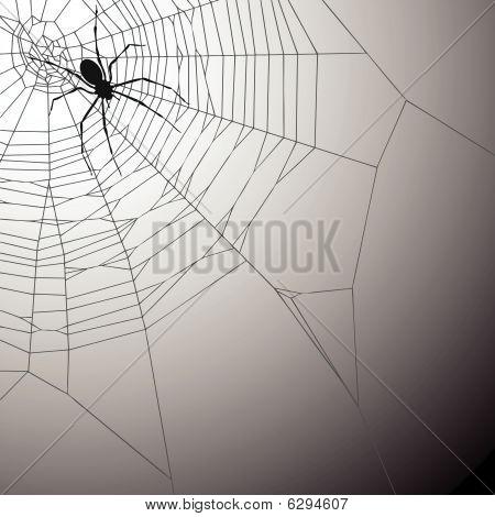 SpiderWeb achtergrond