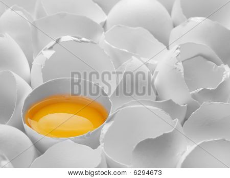 One Yelk In Broken Egg Shell