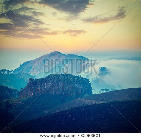 Vintage retro hipster style travel image of Kerala India travel background - sunrise and tea plantations in Munnar, Kerala, India