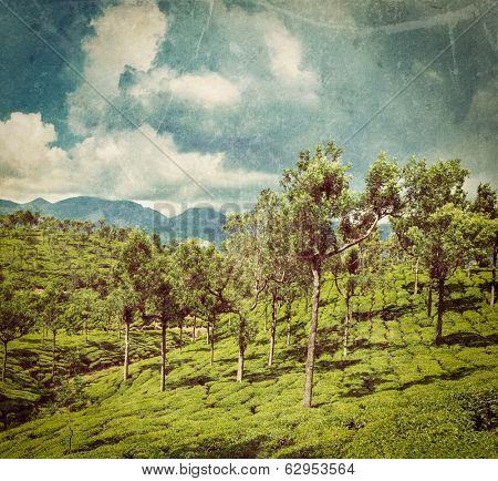 Vintage retro hipster style travel image of Kerala India travel background - green tea plantations with trees in Munnar, Kerala, India close up with grunge texture overlaid