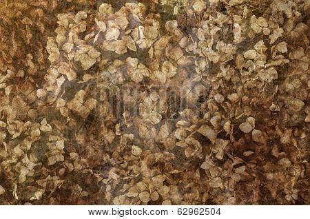 Dried Hydrangeas in Textured Background
