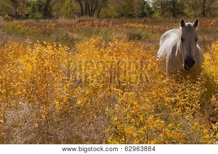 Beautiful White Horse Againts A Yellow Background