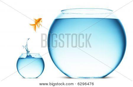 Peixinho pulando fora da água
