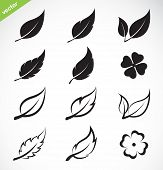 pic of red clover  - Vector leaves icon set on white background - JPG
