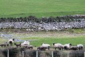 pic of galway  - A lovely farm with sheep in County Galway - JPG