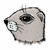 picture of gopher  - hand drawn sketch cartoon illustration of gopher - JPG