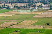 image of tamil  - Aeiral view of Indian countryside with rice paddies - JPG