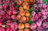 stock photo of farmer  - Image of Colorful Beets At The Hollywood Farmer - JPG