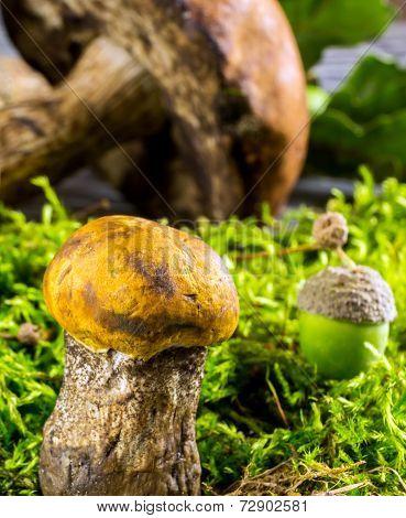Fresh Forest Mushrooms