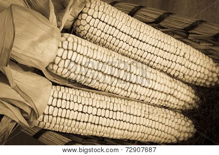 Autumn Corn in Sepia