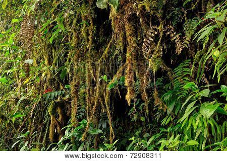 Amazonian Flora National Park Yasuni