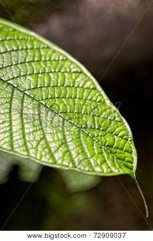 Amazon Plants, Tropical Forest, National Park Yasuni, Ecuador