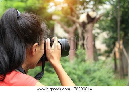 woman photographer taking photo of panda