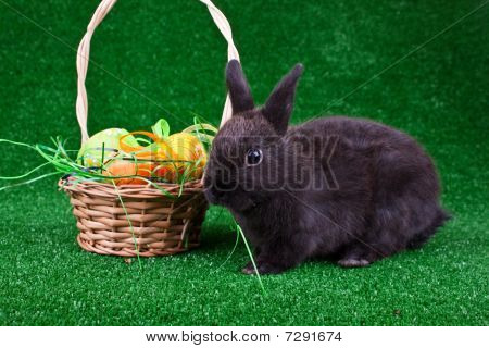 Easter Eggs In Nest And Black Rabbit