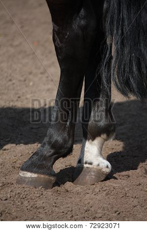 Close Up Of Horse Hoof Standing On The Ground