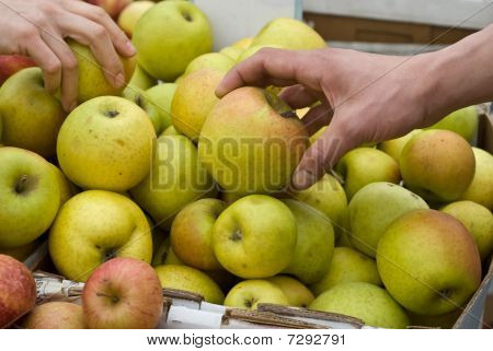 Apple Shopping at Farmer's Market