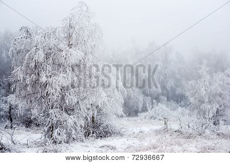 The Christmas Mysterious Winter Snowy Forest In A Fog, Russia