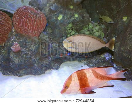 Beautiful Coral Fish In Blue Water