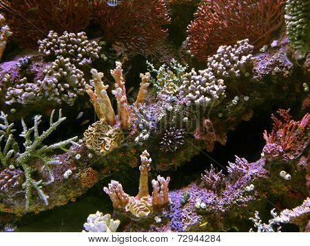 Coral Reef With Exotic Fishes At Colorful Tropical Sea