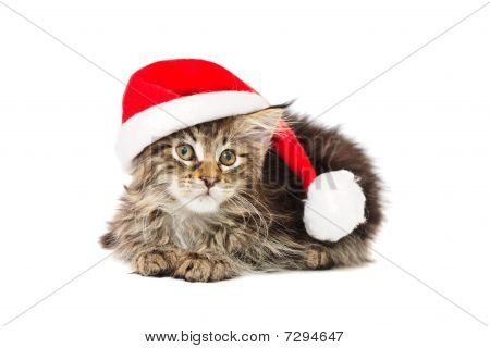 Kitten In Red  Hat