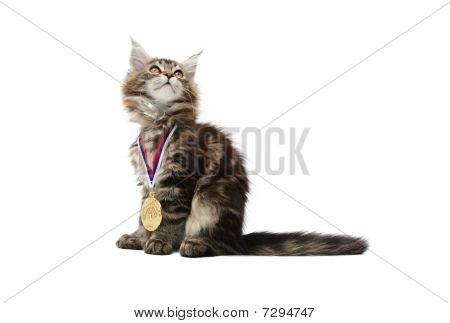 Small Kitten With Gold Medal
