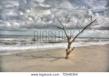 Oak tree in sand with stormy sky