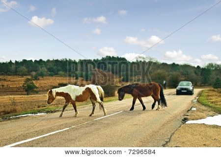 Ponies crossing the road.