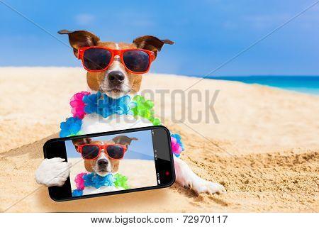 Dog At The Beach Selfie