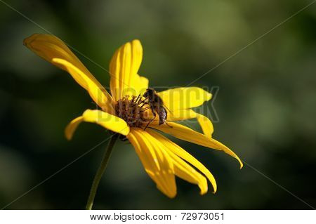 Bee Sitting In The Middle Of Beautiful Flower