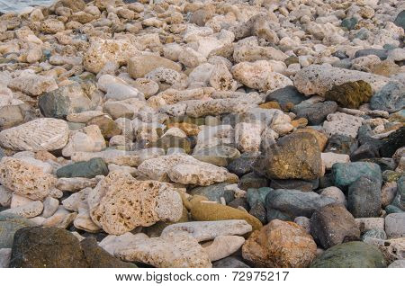 Coral And Rock Beach Close Up