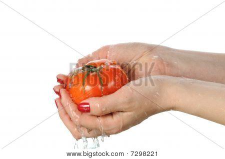 Tomato In Palms