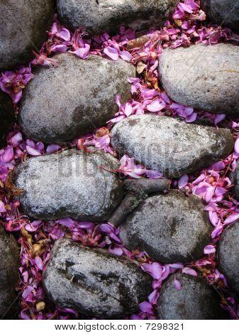 Steine mit rosa Flieder Blüten