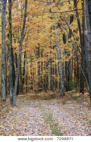 Fall Woods Road