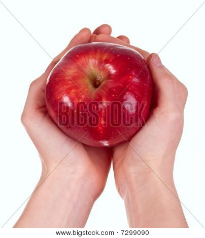 Red Delicious Apple In Woman's Hands On White Background.