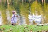 foto of baby goose  - Cute Baby Girl Chasing Wild Geese In An Autumn Park - JPG