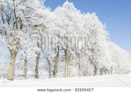 Trees in winter covered with hoarfrost
