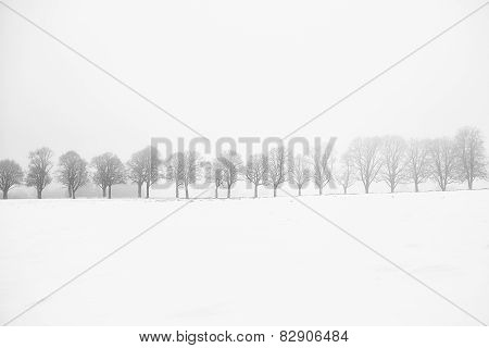 Leafless alley of trees on a snow field with fog
