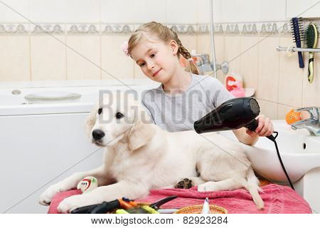 girl grooming of her s dog at home