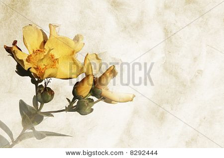 Textured background with flowers and space for text or image