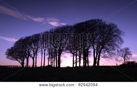 Sunset Woodland
