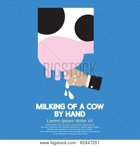 Milking Of A Cow.