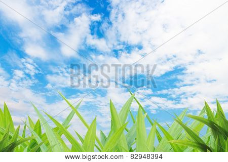 Green Grass Yard And Cloud Blue Sky Background
