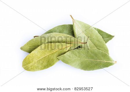 Bay Laurel Leaves Isolated On White Background