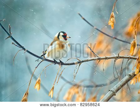 Goldfinch Bird Sitting On A Branch