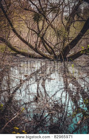 Swamp With Branched Tree And Water In Spring