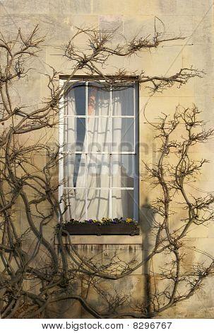 Window in Downing College Cambridge University