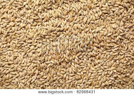 Malt Grains