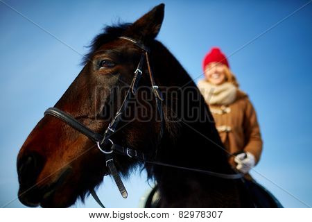 Purebred horse with young woman riding it