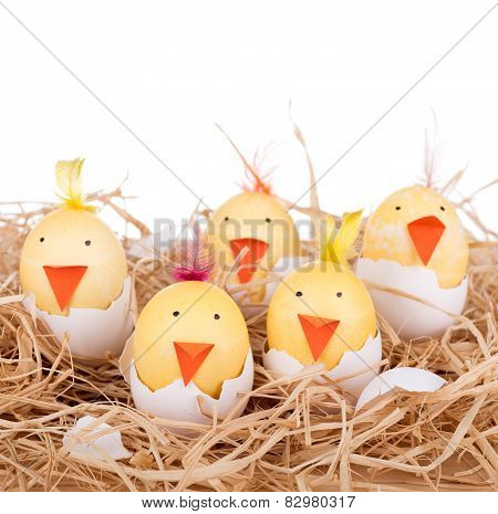 Easter Egg Chicks