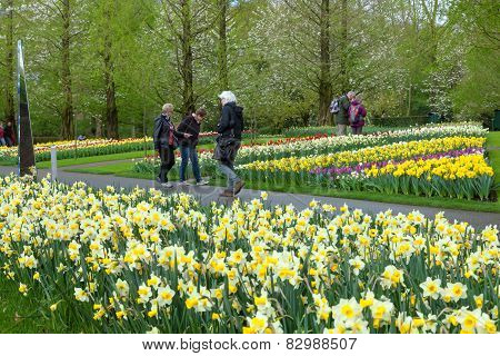 KEUKENHOF GARDEN NETHERLANDS - APRIL 08: Keukenhof is the world's largest flower garden with 7 milli